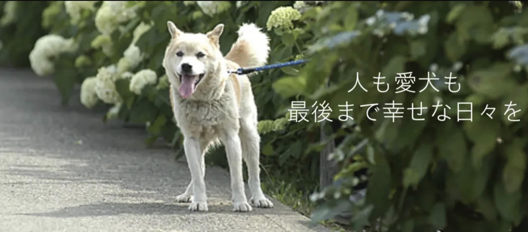 人も愛犬も最後まで幸せな毎日を